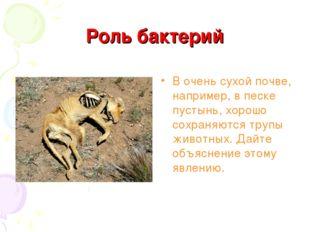 Роль бактерий В очень сухой почве, например, в песке пустынь, хорошо сохраняю