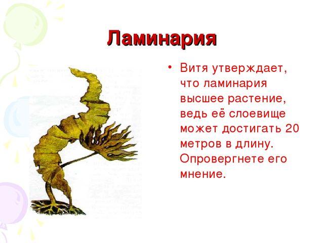 Ламинария Витя утверждает, что ламинария высшее растение, ведь её слоевище мо...