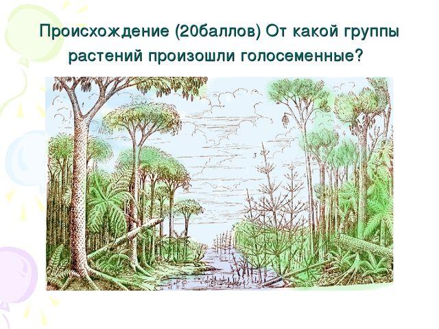 Происхождение (20баллов) От какой группы растений произошли голосеменные?