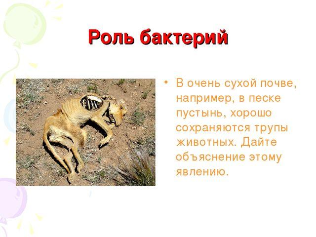 Роль бактерий В очень сухой почве, например, в песке пустынь, хорошо сохраняю...