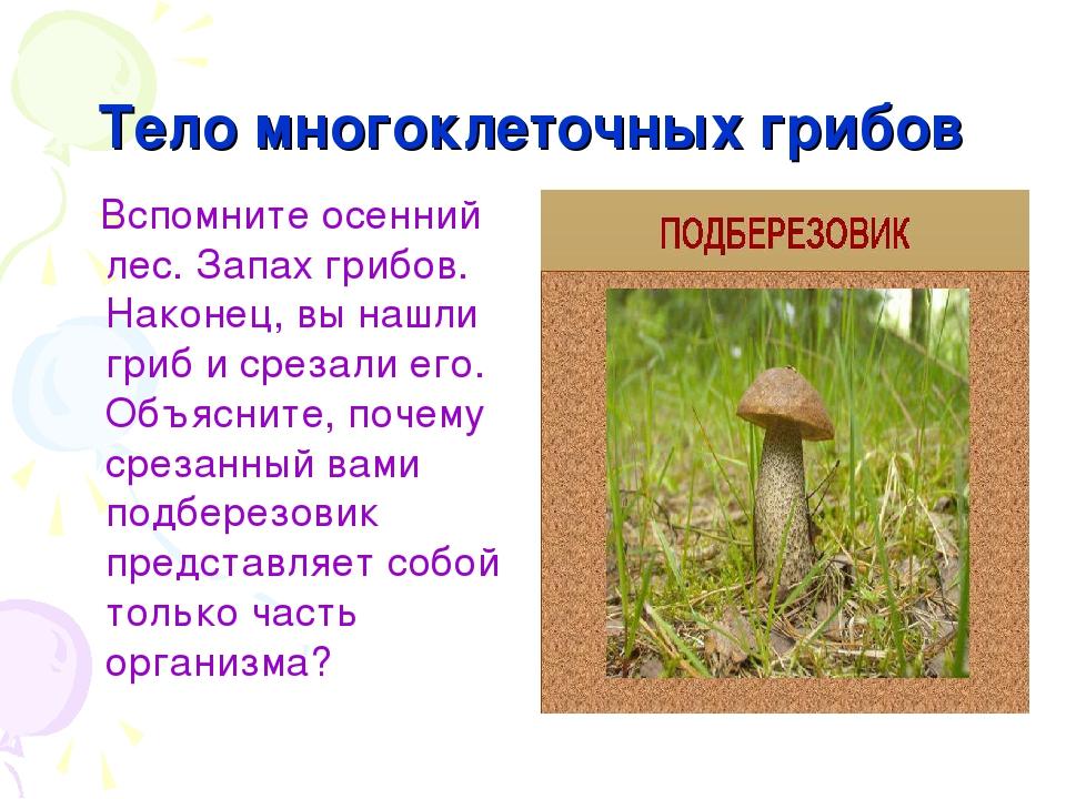 Тело многоклеточных грибов Вспомните осенний лес. Запах грибов. Наконец, вы н...