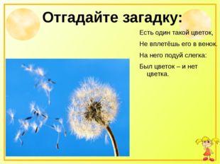 Отгадайте загадку: Есть один такой цветок, Не вплетёшь его в венок. На него п