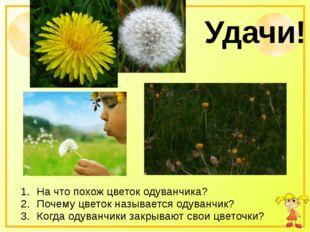 Удачи! На что похож цветок одуванчика? Почему цветок называется одуванчик? К