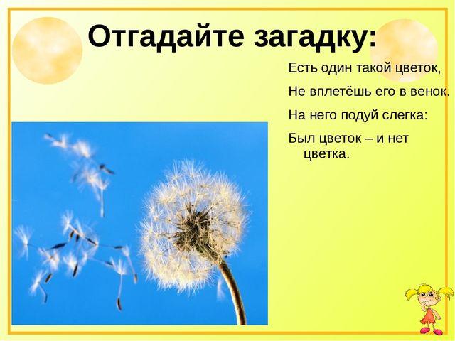 Отгадайте загадку: Есть один такой цветок, Не вплетёшь его в венок. На него п...