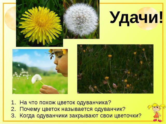 Удачи! На что похож цветок одуванчика? Почему цветок называется одуванчик? К...
