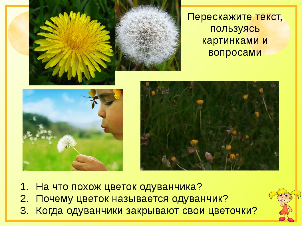 Перескажите текст, пользуясь картинками и вопросами На что похож цветок одува...