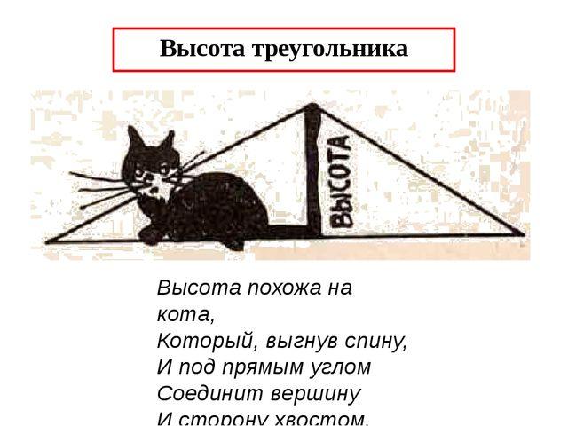 Высота треугольника Высота похожа на кота, Который, выгнув спину, И под прямы...