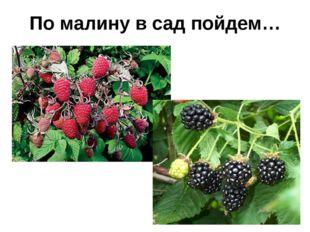 По малину в сад пойдем…