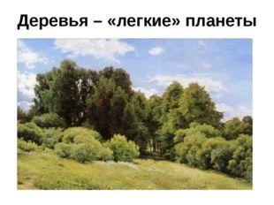 Деревья – «легкие» планеты