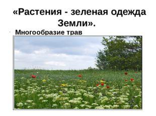«Растения - зеленая одежда Земли». Многообразие трав