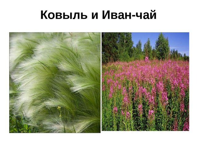 Ковыль и Иван-чай