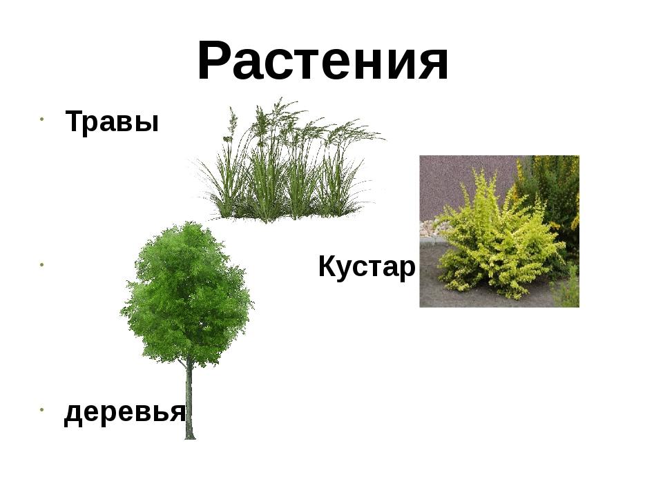 Растения Травы Кустарники деревья