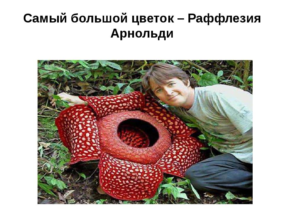 Самый большой цветок – Раффлезия Арнольди