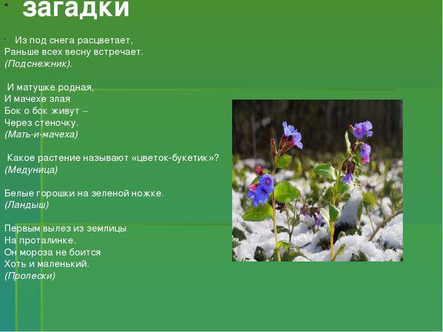 загадки Из под снега расцветает, Раньше всех весну встречает. (Подснежник)....