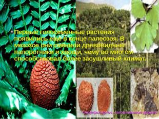 Первые голосеменные растения появились еще в конце палеозоя. В мезозое они см
