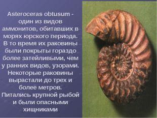 Asteroceras obtusum - один из видов аммонитов, обитавших в морях юрского пери