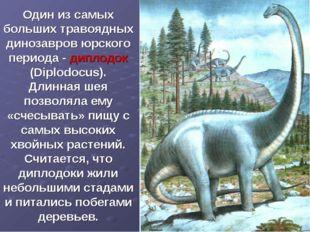 Один из самых больших травоядных динозавров юрского периода - диплодок (Diplo