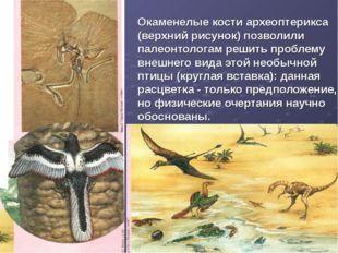 Окаменелые кости археоптерикса (верхний рисунок) позволили палеонтологам реши