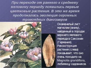 При переходе от раннего к среднему меловому периоду появились первые цветковы