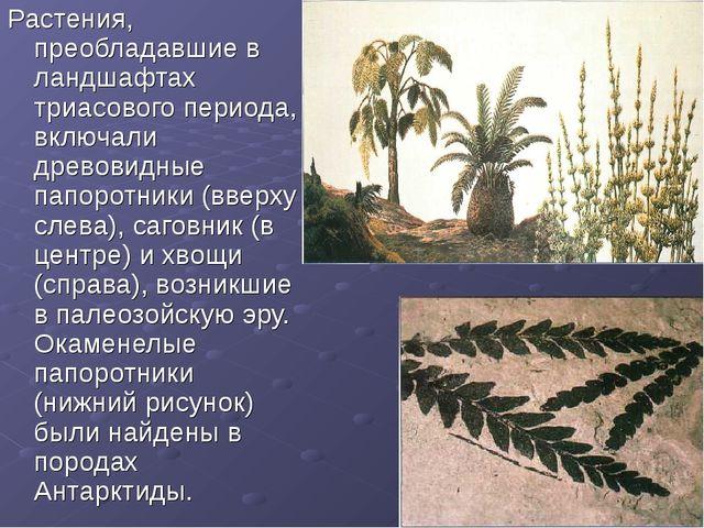 Растения, преобладавшие в ландшафтах триасового периода, включали древовидные...
