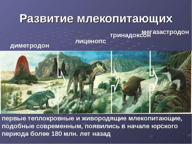Развитие млекопитающих диметродон лиценопс тринадоксон мегазастродон первые т...