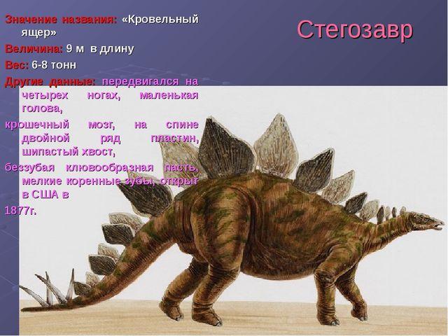 Стегозавр Значение названия: «Кровельный ящер» Величина: 9 м в длину Вес: 6-8...