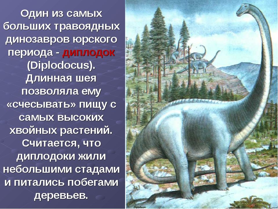 Один из самых больших травоядных динозавров юрского периода - диплодок (Diplo...