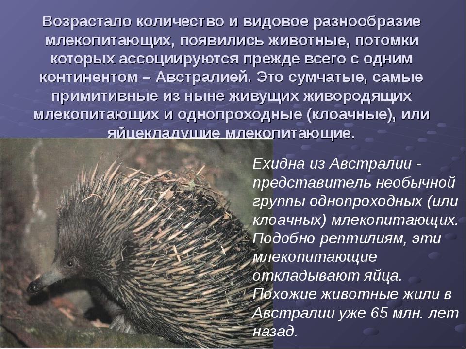 Возрастало количество и видовое разнообразие млекопитающих, появились животны...