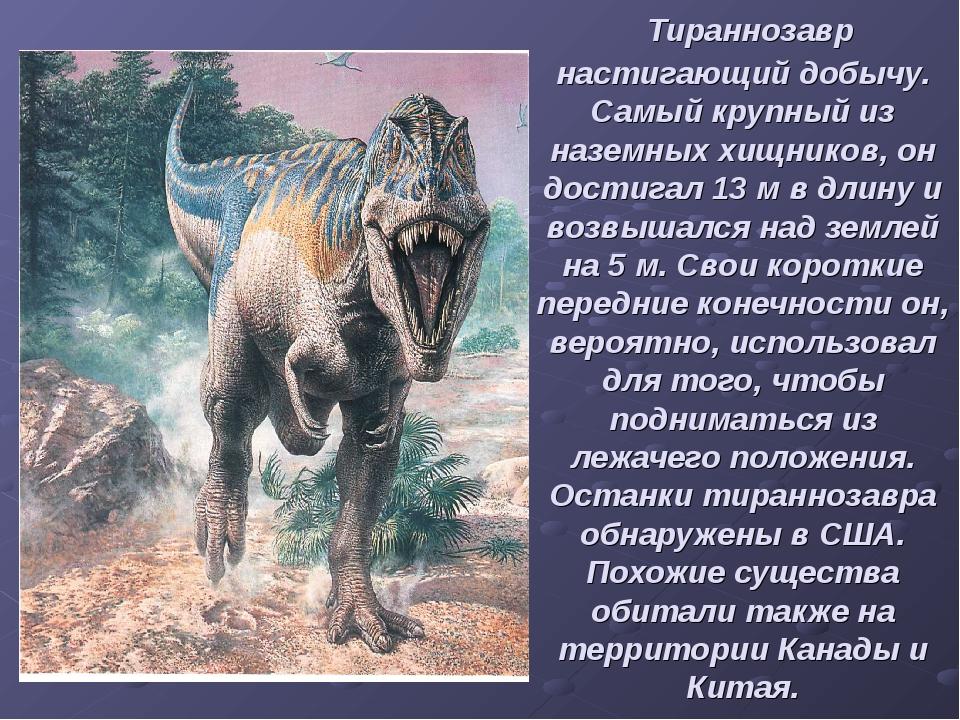 Тираннозавр настигающий добычу. Самый крупный из наземных хищников, он дости...