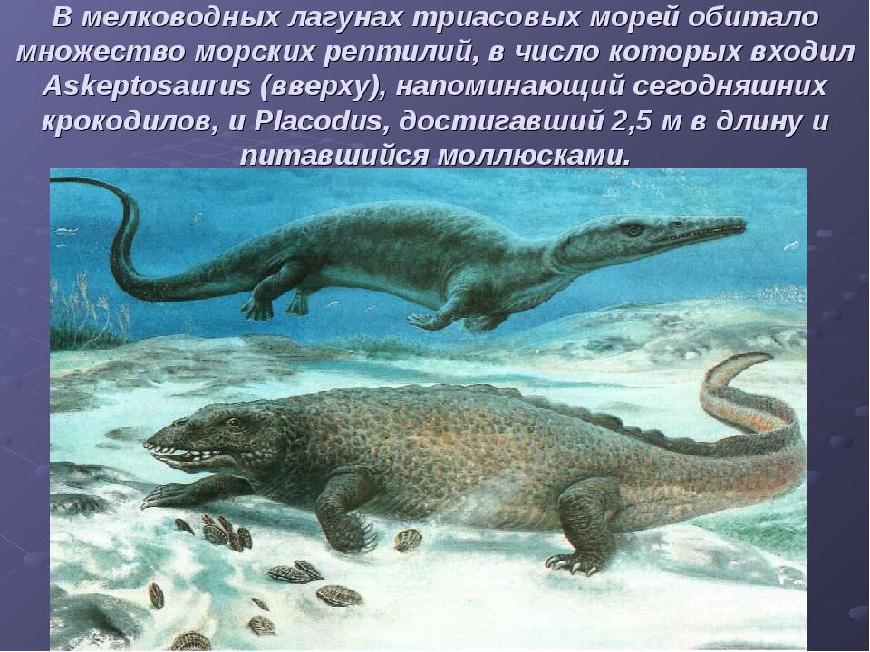 В мелководных лагунах триасовых морей обитало множество морских рептилий, в ч...
