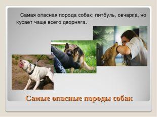 Самые опасные породы собак Самая опасная порода собак: питбуль, овчарка, но к