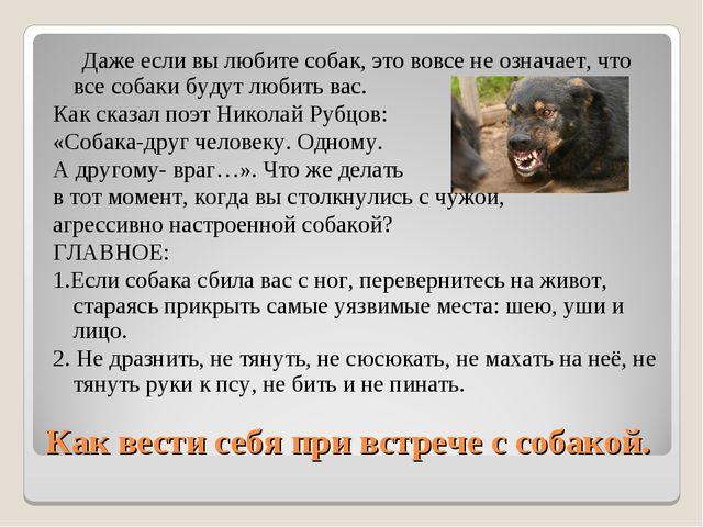Как вести себя при встрече с собакой. Даже если вы любите собак, это вовсе не...