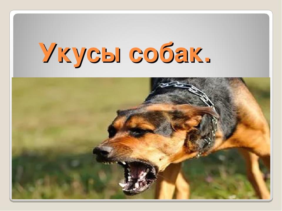 Укусы собак.