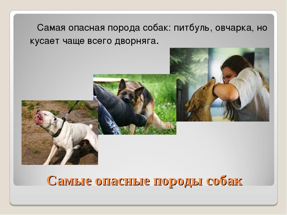 Самые опасные породы собак Самая опасная порода собак: питбуль, овчарка, но к...