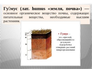Гу́мус(лат.humus«земля, почва») —основное органическое вещество почвы, содерж