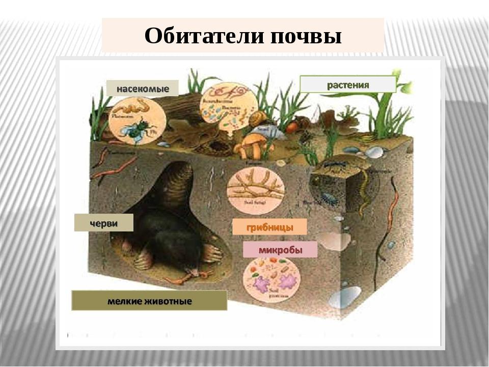 Обитатели почвы