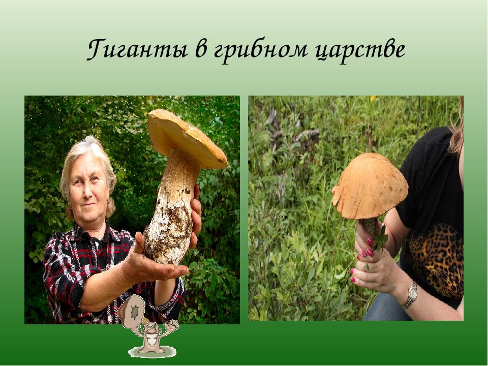 Гиганты в грибном царстве