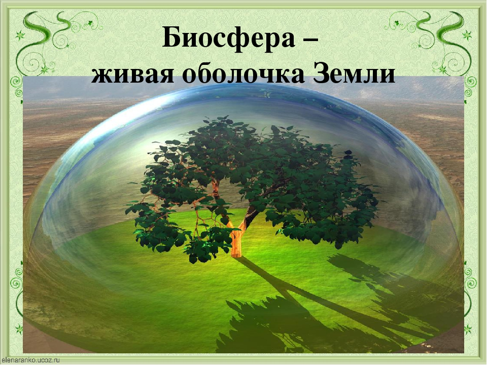 Биосфера – живая оболочка Земли