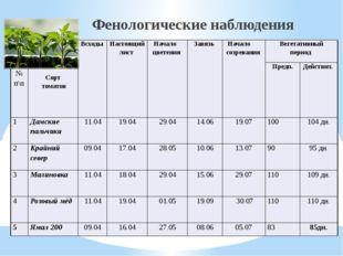 Фенологические наблюдения № п\п Сорт томатов Всходы Настоящий лист Начало цв