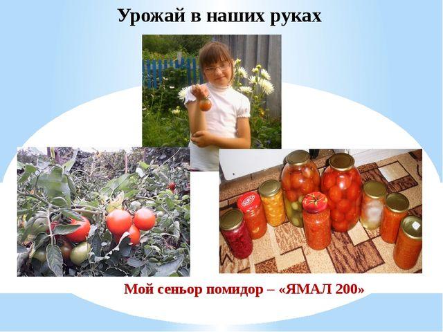 Мой сеньор помидор – «ЯМАЛ 200» Урожай в наших руках
