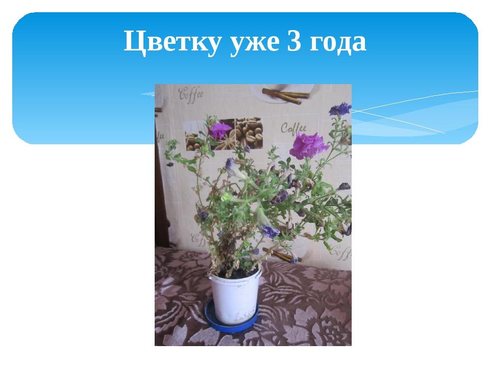Цветку уже 3 года