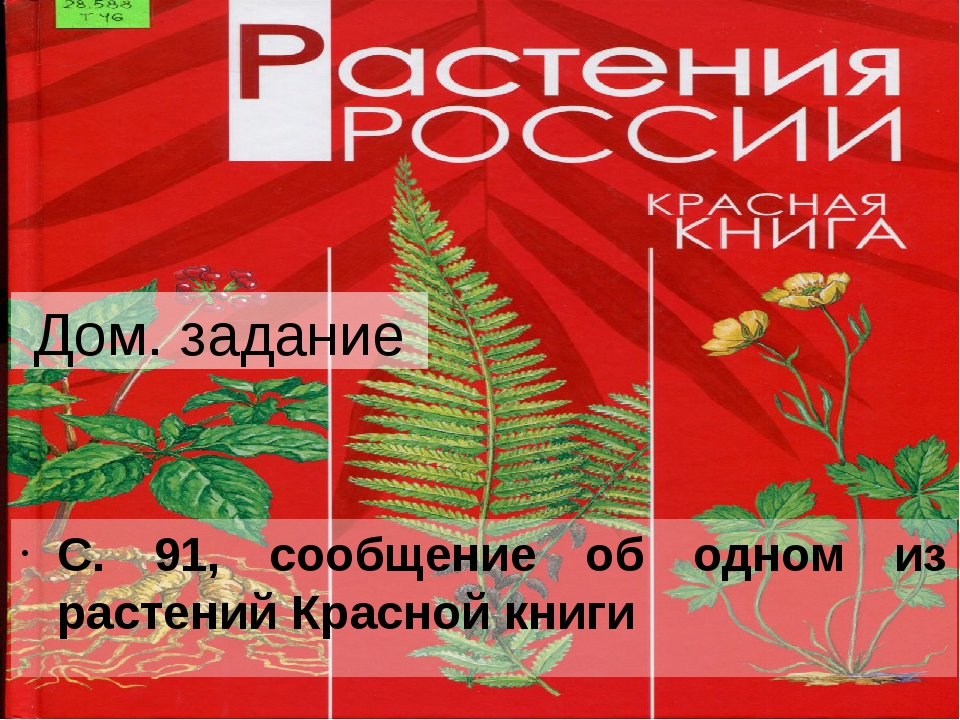 Дом. задание С. 91, сообщение об одном из растений Красной книги