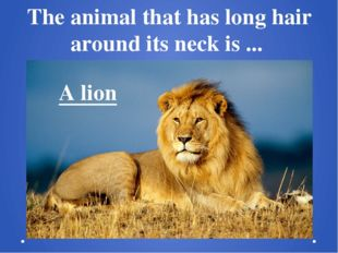 The animal that has long hair around its neck is ...  A lion
