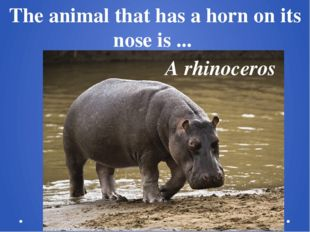 The animal that has a horn on its nose is ...  A rhinoceros