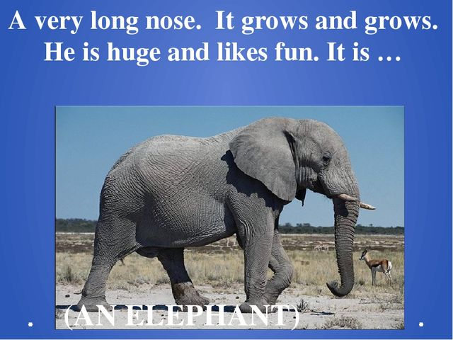 A very long nose.  It grows and grows.  Не is huge and likes fun. It is … (AN...