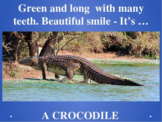 Green and long  with many teeth. Beautiful smile - It's … A CROCODILE