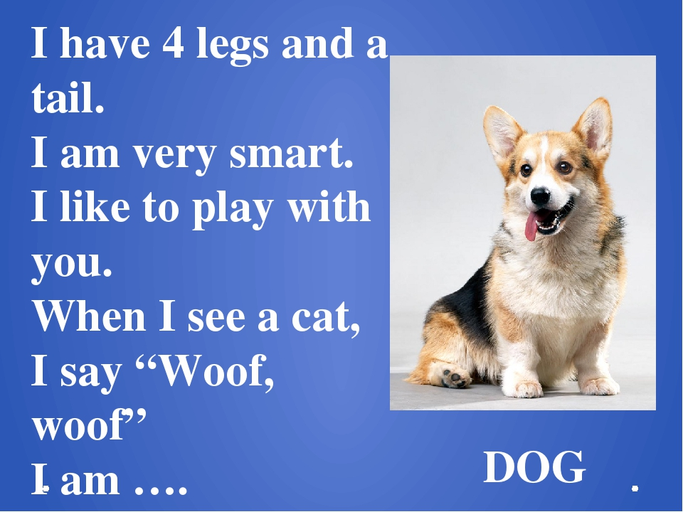 I have 4 legs and a tail. I am very smart. I like to play with you. When I se...