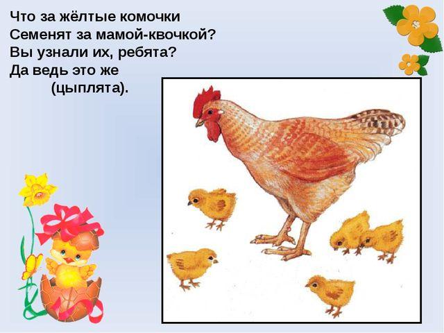 Что за жёлтые комочки Семенят за мамой-квочкой? Вы узнали их, ребята? Да ведь...