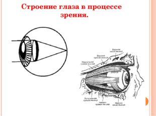 Строение глаза в процессе зрения.