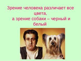 Зрение человека различает все цвета, а зрение собаки – черный и белый